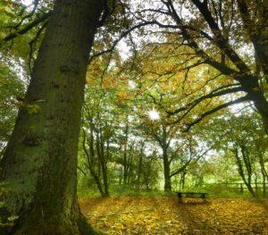 sundhed kan være en vandretur i skoven med Peter